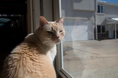 2013-05-Pets