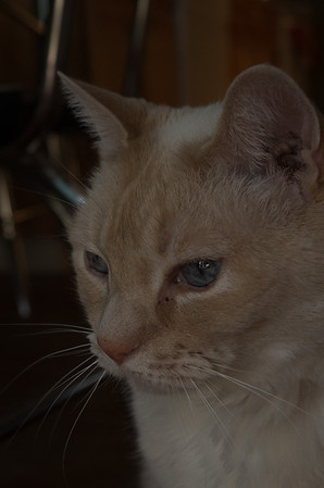 2013-08-Pets
