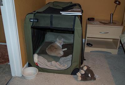 2013-12-Pets