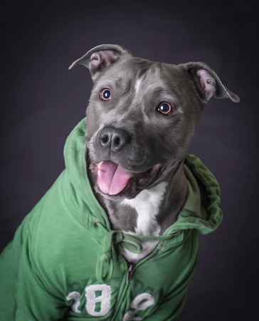 Pet-Portraits-CC_LB_Photography-12