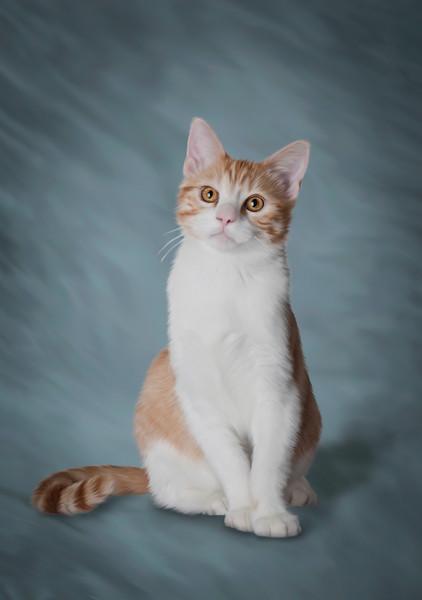 Pet-Portraits-CC_LB_Photography-1
