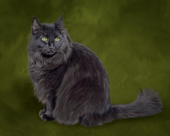 Pet-Portraits-CC_LB_Photography-5