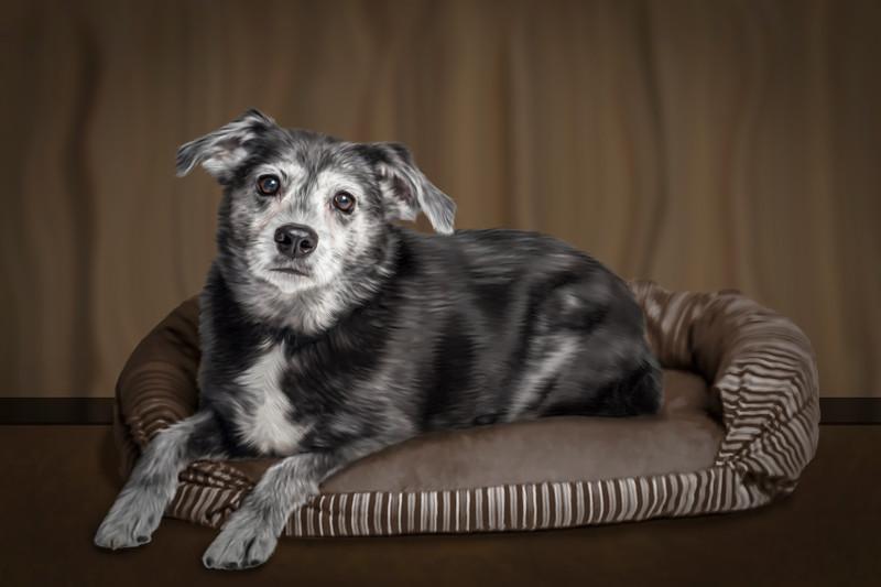 Pet-Portraits-CC_LB_Photography-10