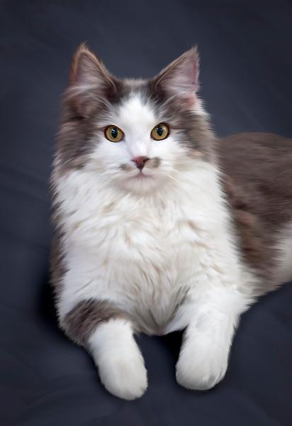 Pet-Portraits-CC_LB_Photography-3