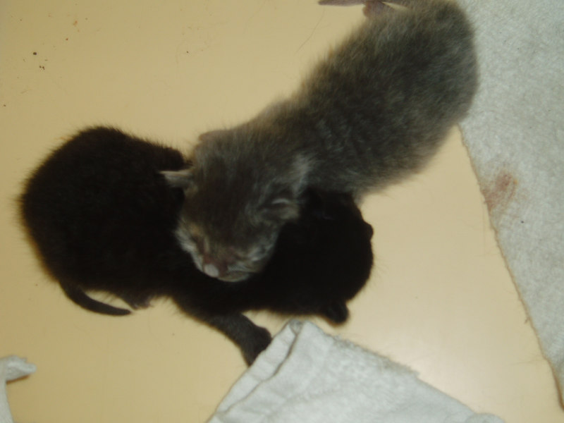 new kittens: Sprit and Ace