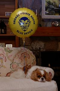 Balloon Pooch