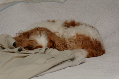 Sleeping On Our Bed (1)