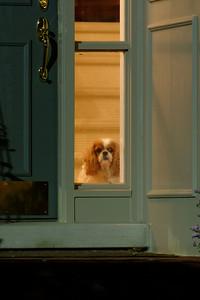 Peeking Out Front Door