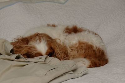 Sleeping On Our Bed (2)