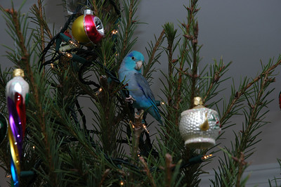 In Christmas Tree