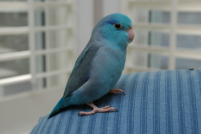 On Blue Chair
