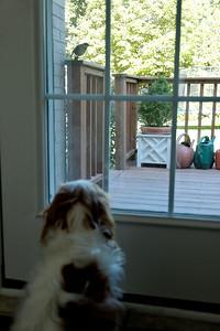 Pepper Watching (2)