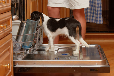 Licking the Dishes (2)