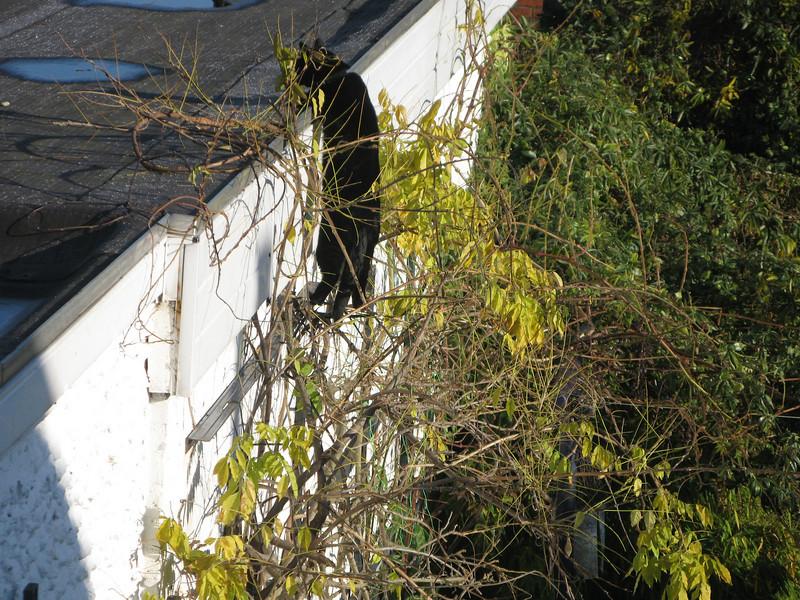 Even bij de buren op het dak kijken of er toevallig nog iets te eten rondhipt.