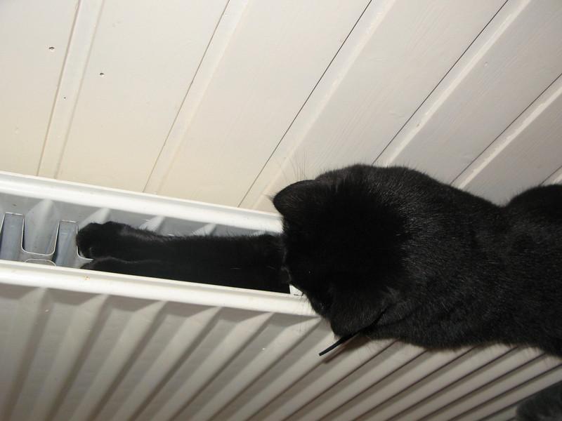 Een slimme kat zoekt altijd het warmste plekje op om te slapen. Maar of het ook het zachtste plekje is???