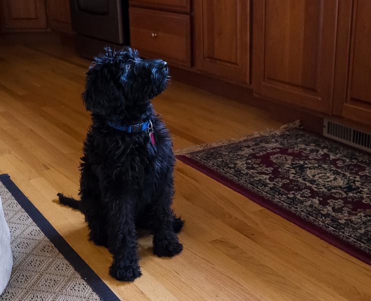 April 15 2012 - Piper