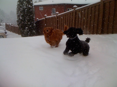pets in snow