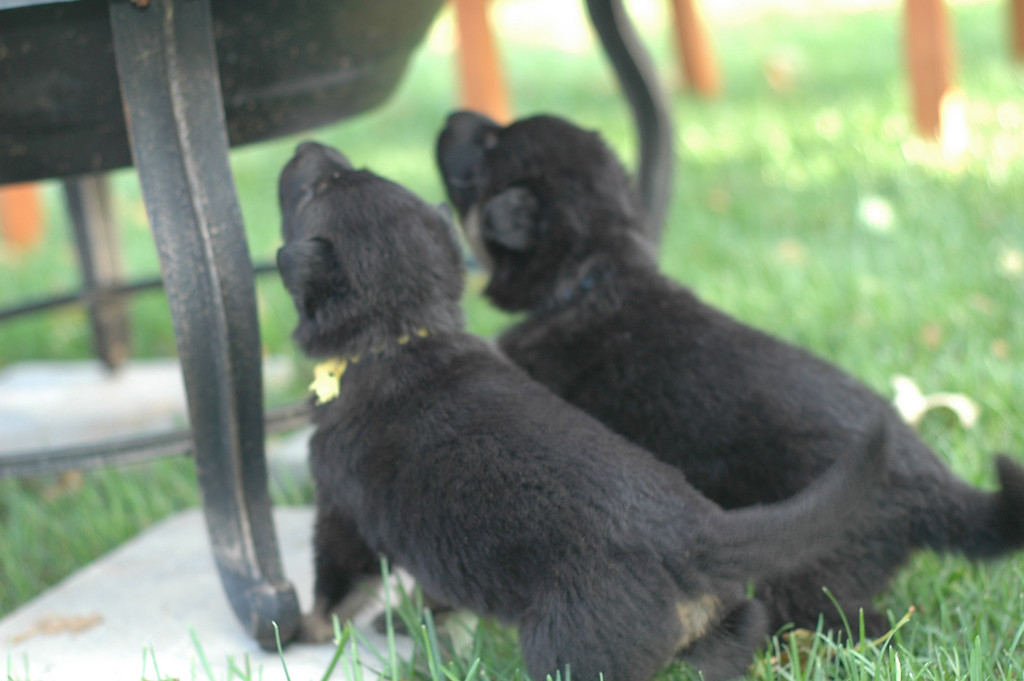 Yellow girl & lt blue boy exploring<br /> <br /> 3.5wks old