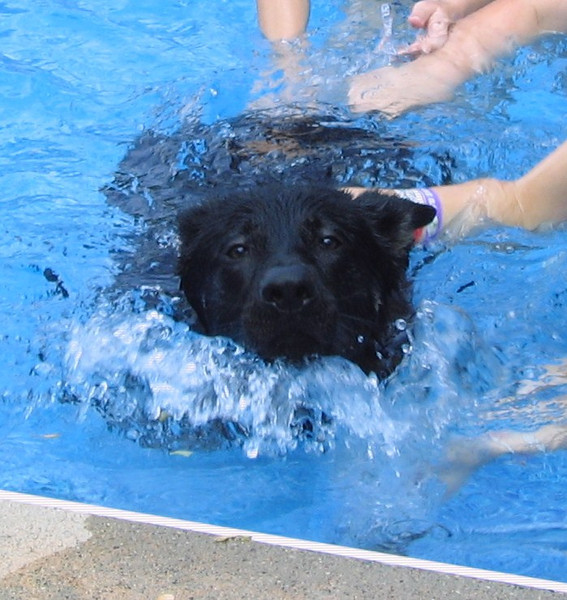 Phalen vom Geistwasser (aka Bear) enjoying the pool, and the grandkids :)