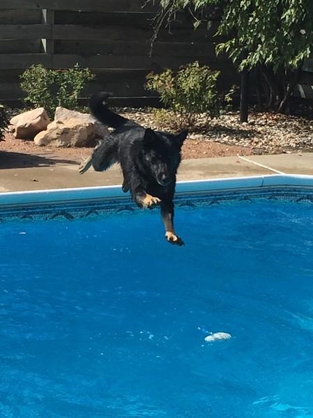 """Phalen vom Geistwasser, aka """"Bear"""" enjoying a summer swim. (2015)"""