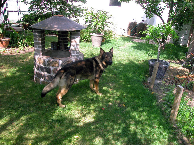Pike at almost three years old<br /> August 2013