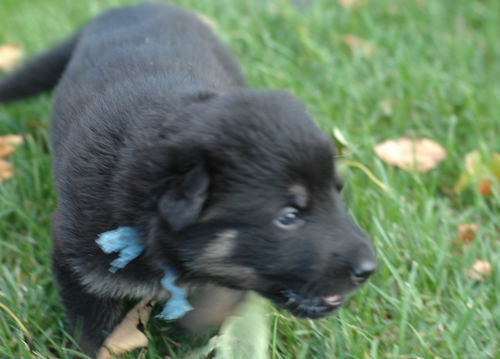lt blue boy<br /> <br /> 3.5wks old