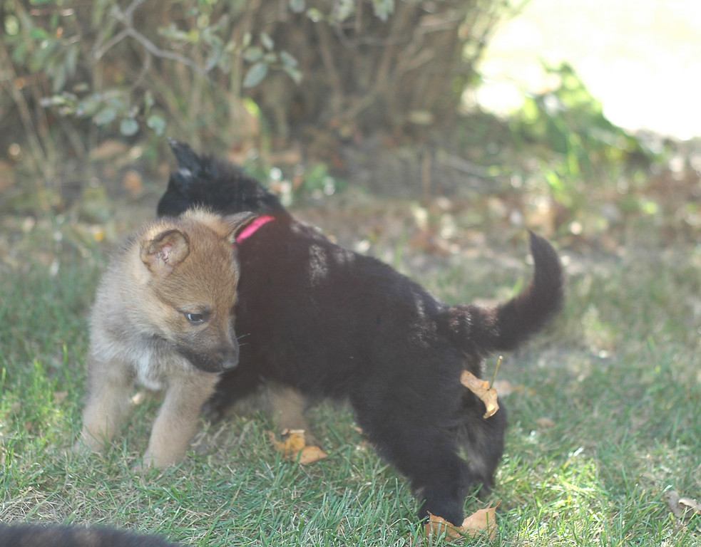 posturing lol (pink girl & rainbow boy)<br /> <br /> 5.5wks old