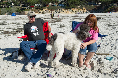 Poodle Day 2013 - Beach Play