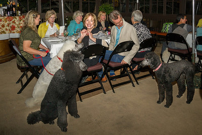 Poodle Day 2013 - Private Party at Grasing's