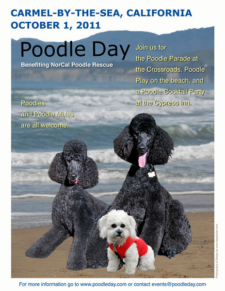 Poodle poster 2011