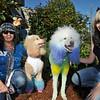 #549<br /> Standard Poodle - owner Sarah Poling
