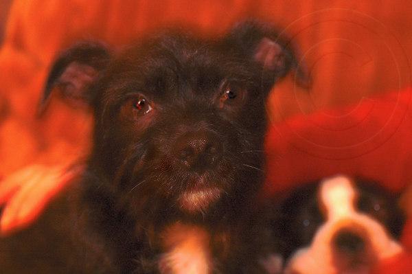 taken Nov 29/06 Monty with Poppy