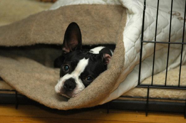 Poppy loves her custom Sleep sack