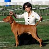 Santa Barbara Kennel Club<br /> 8-29-10<br /> Deborah V Frane