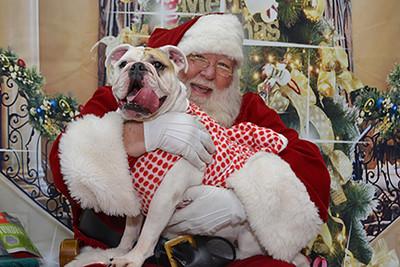 Shari Santa