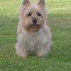 Nellie 1