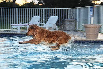 Leaping Golden