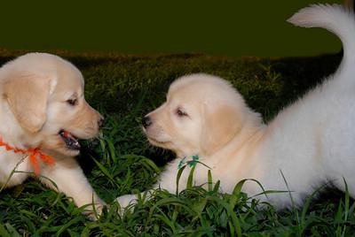 green back pups