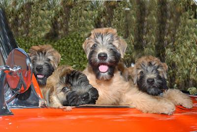 4 car pups 3a
