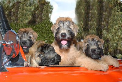 4 car pups 3