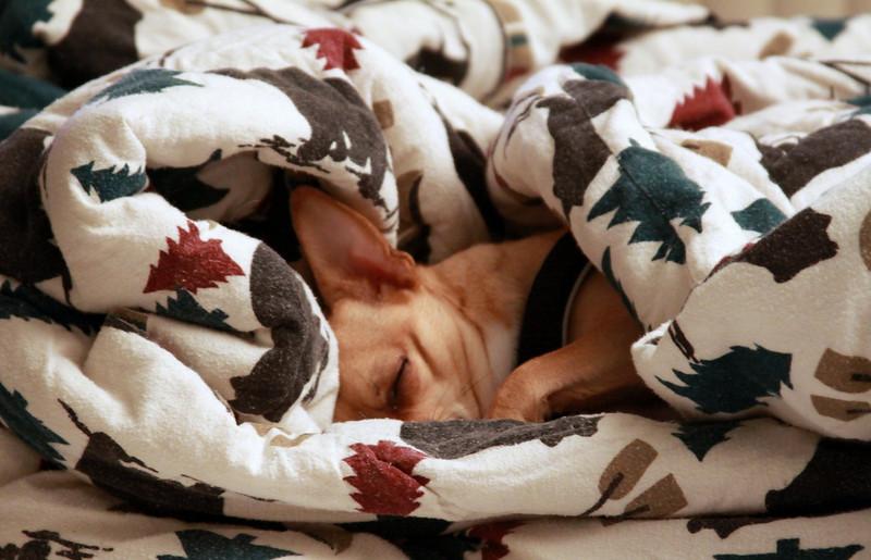 Sleep tight little man!