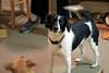 Gertie, posing!