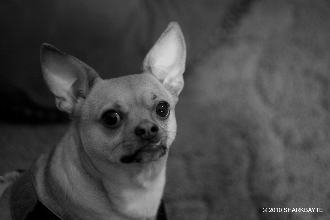 Just trying black and white for the first time. #365Project Day 308 (2010.11.04) @sharkbayte