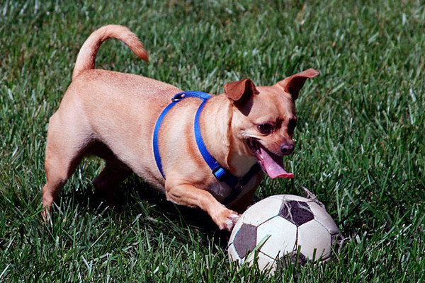 Jasper, playing soccer