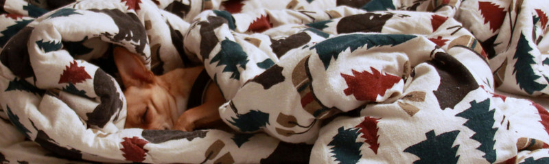 dogs in a blanket, it's snuggle time!