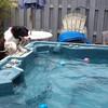 Carlee diving