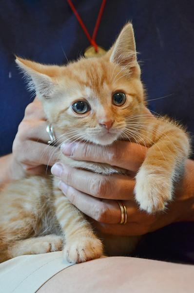Proposed legislation for abandoned pets