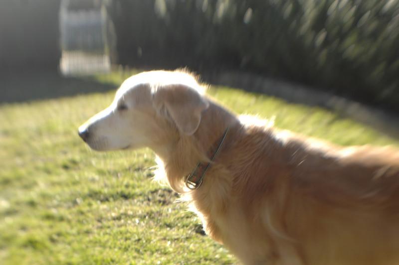 2008-1-09 KL 086