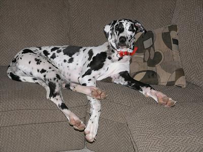 Doggie Lounge