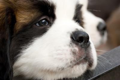 puppies-16-Edit